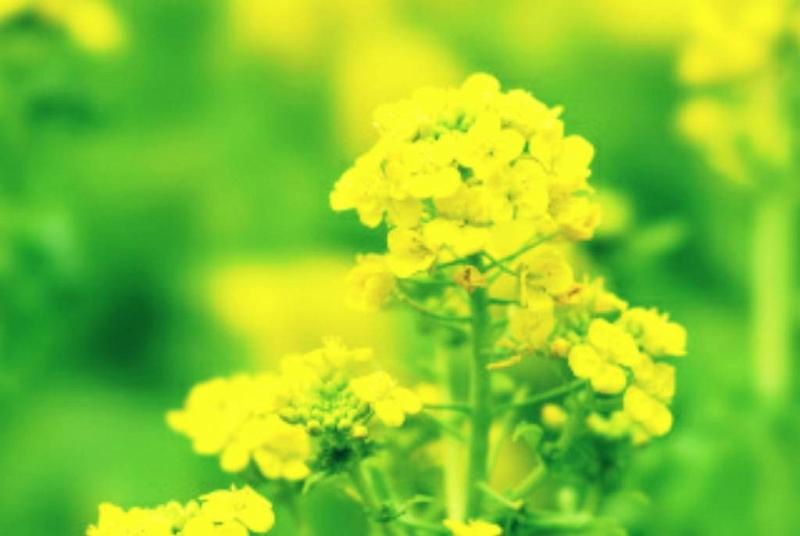 春期彼岸会